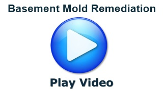 basement mold remediation mold removal